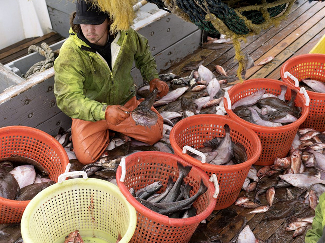 fbga-fishbaskets