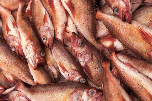 fish-taradawn